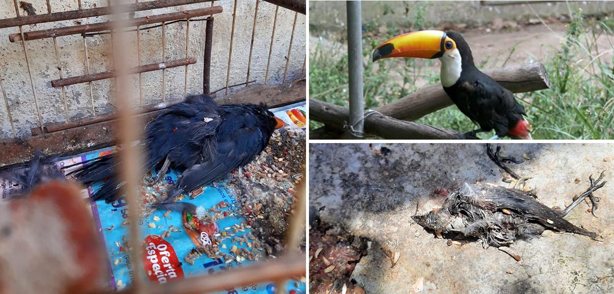 Mais de 600 animais morrem em centro de tratamento do Ibama.