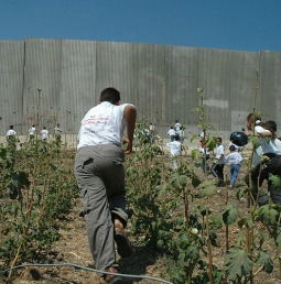 Palestinian children run towards a portion of the Israeli security wall in 2004.