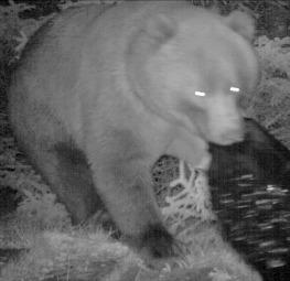 'St. Mary's Bear' makes an appearance.