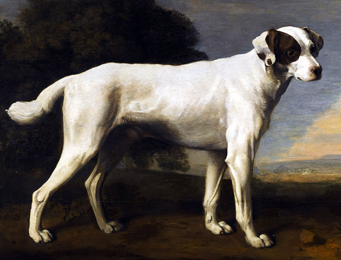 "George Stubbs, ""Viscount Gormanston's White Dog"", 1781"