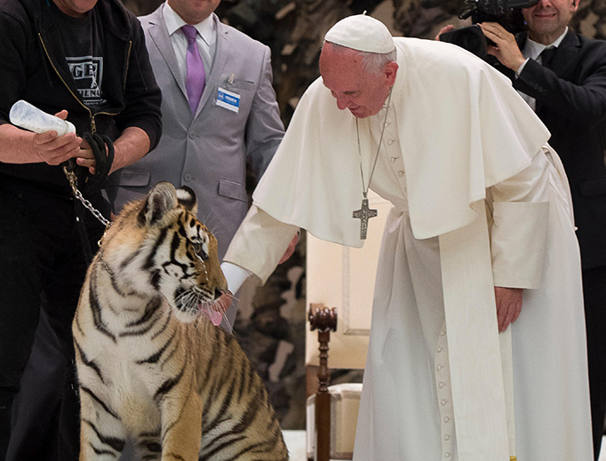 Pope Francis pets a tiger during the Jubilee for Circuses in the Pope Paul VI Hall on June 16, 2016.