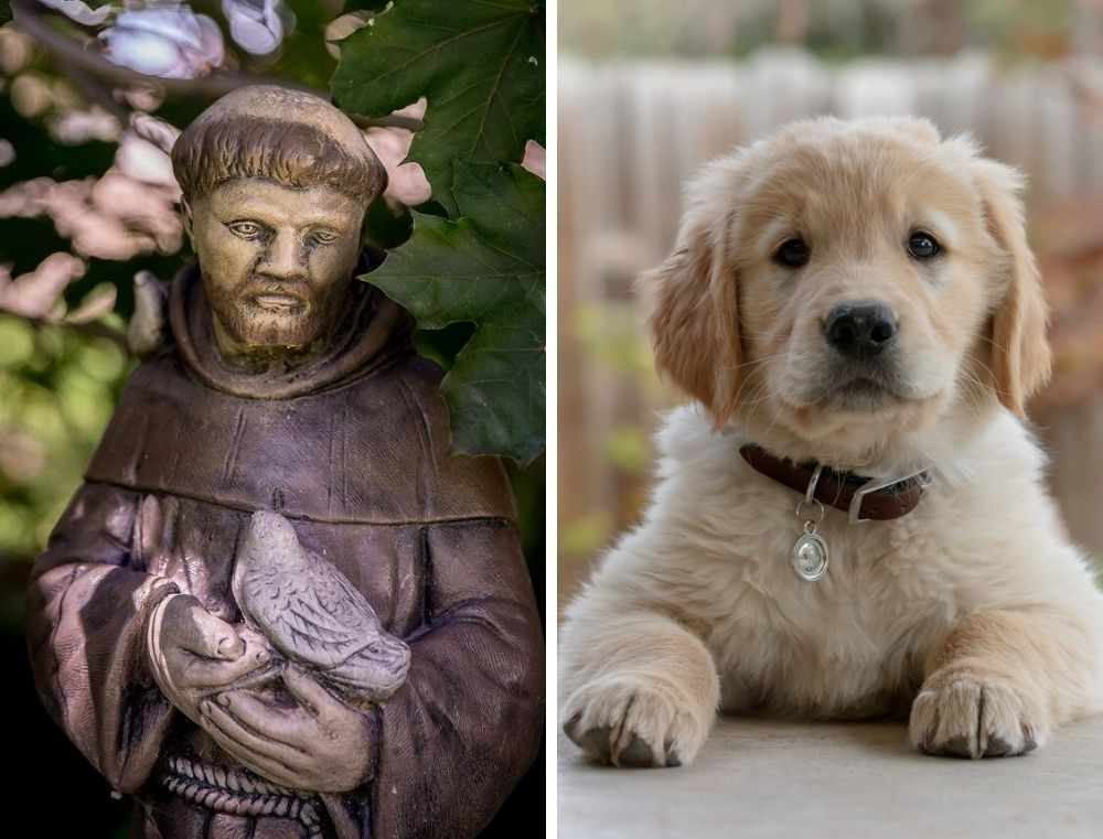 St. Francis and a dog
