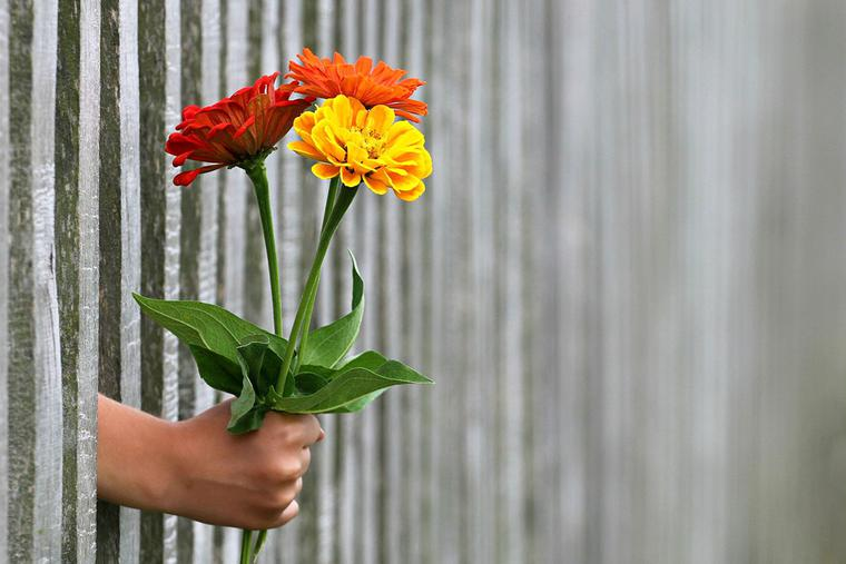"""""""Flowers Through a Fence"""""""
