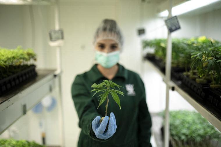 PHOTO: A worker holds a young cannabis clone plant inside the cloning room in this photo taken at the NYSK Holdings cannabis growing facility in Skopje, North Macedonia, on Aug. 15, 2019.