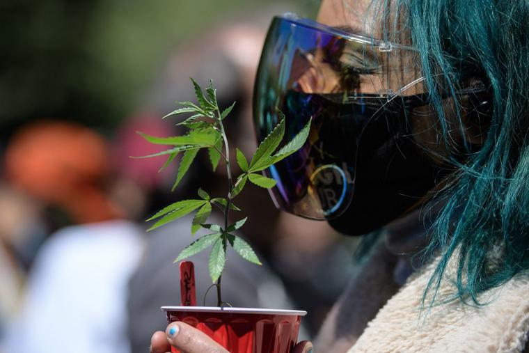 An activist holds a marijuana plant during the NYC Cannabis Parade & Rally in support of the legalization of marijuana for recreational and medical use, on May 1, 2021 in New York City.