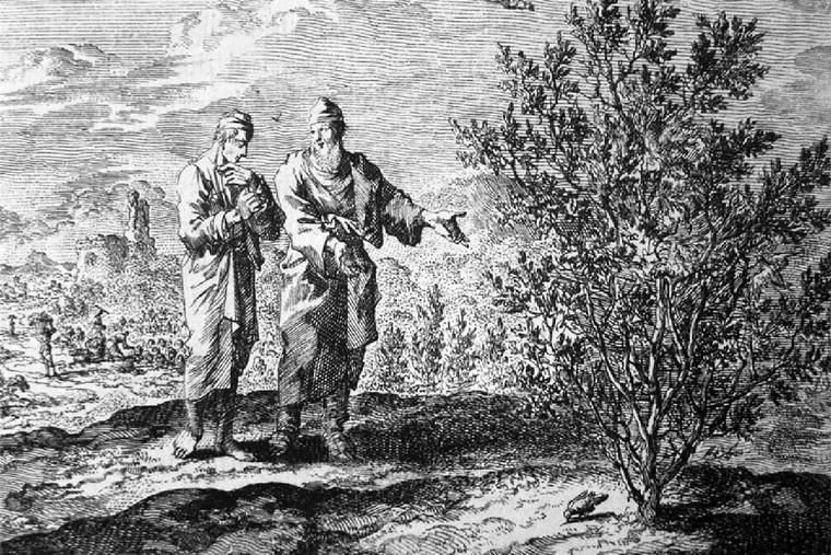 "Jan Luyken (1649-1712), ""Parable of the Mustard Seed"""