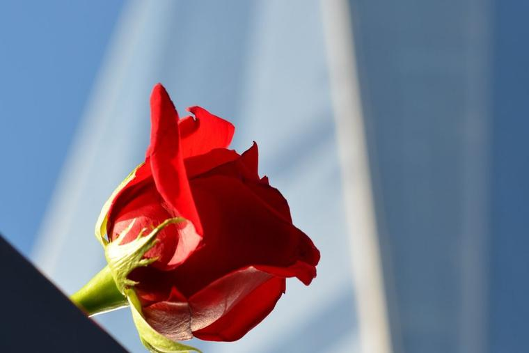 A rose is placed at the 9/11 Memorial in New York City.