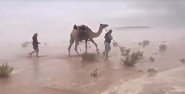Pustinja, poplava, Saudijska Arabija