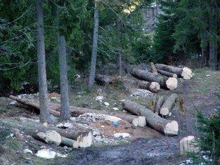 NP Durmitor, krčenje šume