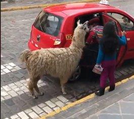 taksi Peru