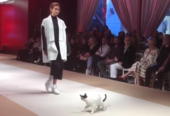 mačka modna revija