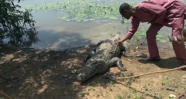 Selo krokodili