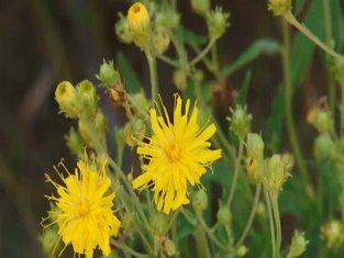 Liječenje biljkama: Alternativna metoda koja nosi brojne potencijalne opasnosti