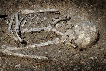 skelet, kostur