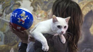 Mačak Ahil