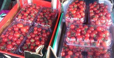 paradajz Nikšić