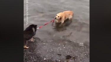 psi i voda