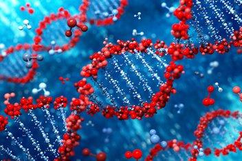 DNK, geni