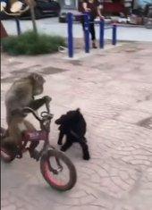 Majmun i bicikl