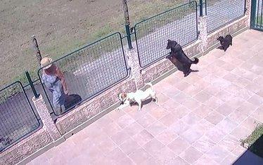 Trovanje psa Donja Gorica