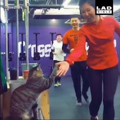 Mačka na treningu