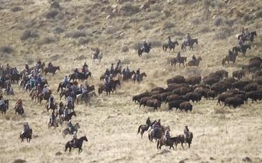 Bizoni kreću na pregled