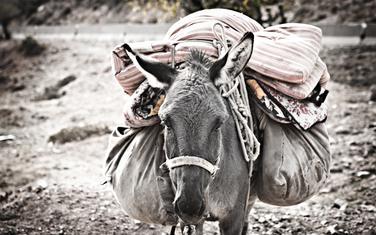 Životinje pronađu put do kuće (ilustracija)