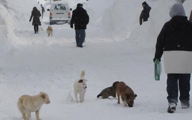 Psi lutalice su veliki problem