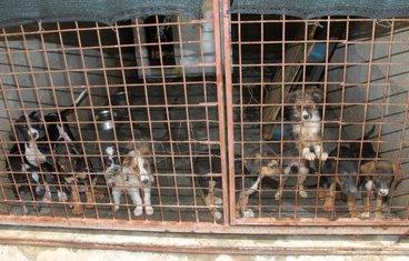 azil za pse, Podgorica