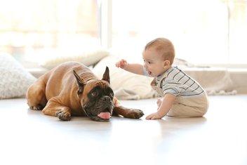pas, beba, ljubimac