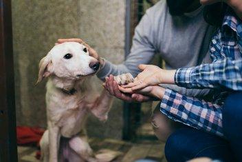 pas, azil za pse