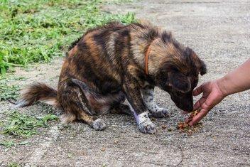 psi lutalice, ulični psi