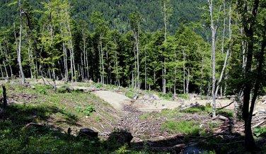 šuma Komovi