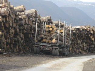 drva, sječa drva