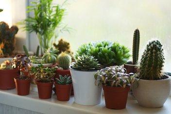 biljke, sobno cvijeće