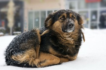 pas, snijeg