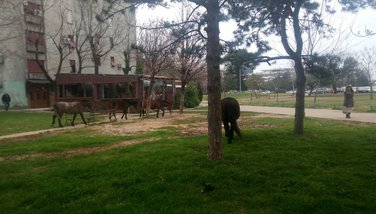 Konji, blok 5, Podgorica