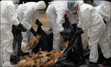 H7N9, ptičiji grip