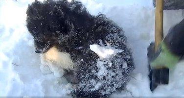 spašavanje pse