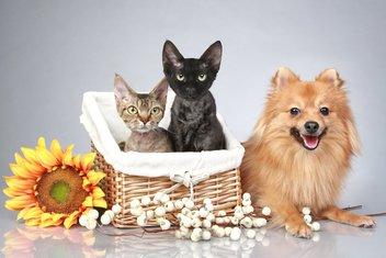 pas i mačka, kućni ljubimac