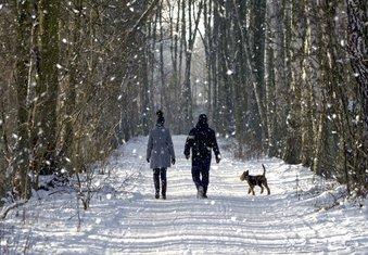 hladnoća, šetnja