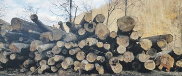 Drva, Veruša