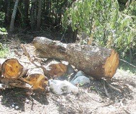 drva, sječa šuma