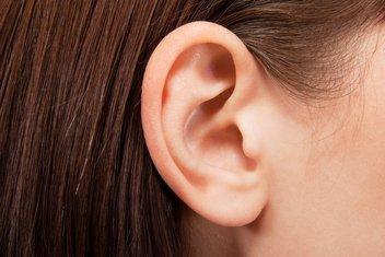 uvo, uši