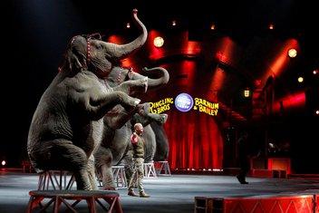 cirkus Ringling Bros