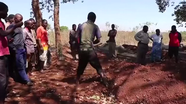Malavi vampiri