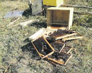 Košnice u Mojkovcu