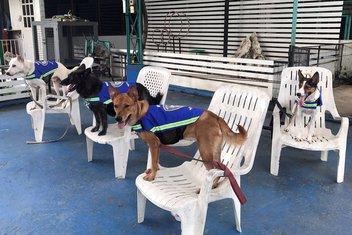 psi lutalice pametni prsluk