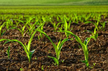 organska proizvodnja, poljoprivreda