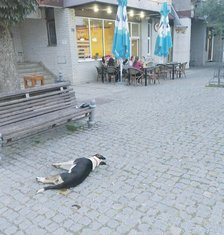 Trovanje pasa, Kolašin